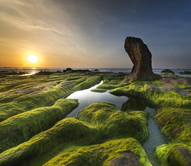 Algae Bioplastics Could be the Future