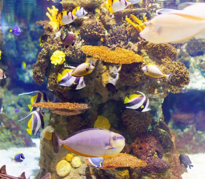 Top Five Coral Reefs Worldwide