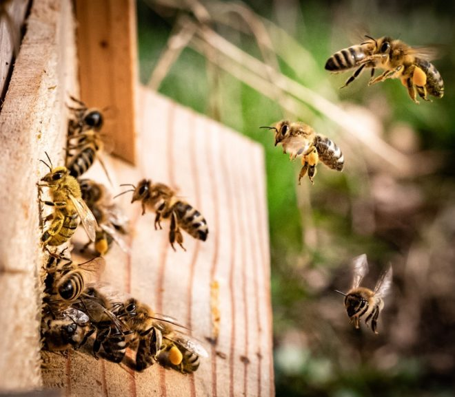 Bee Active: 6 Ways to Help Save the Bees